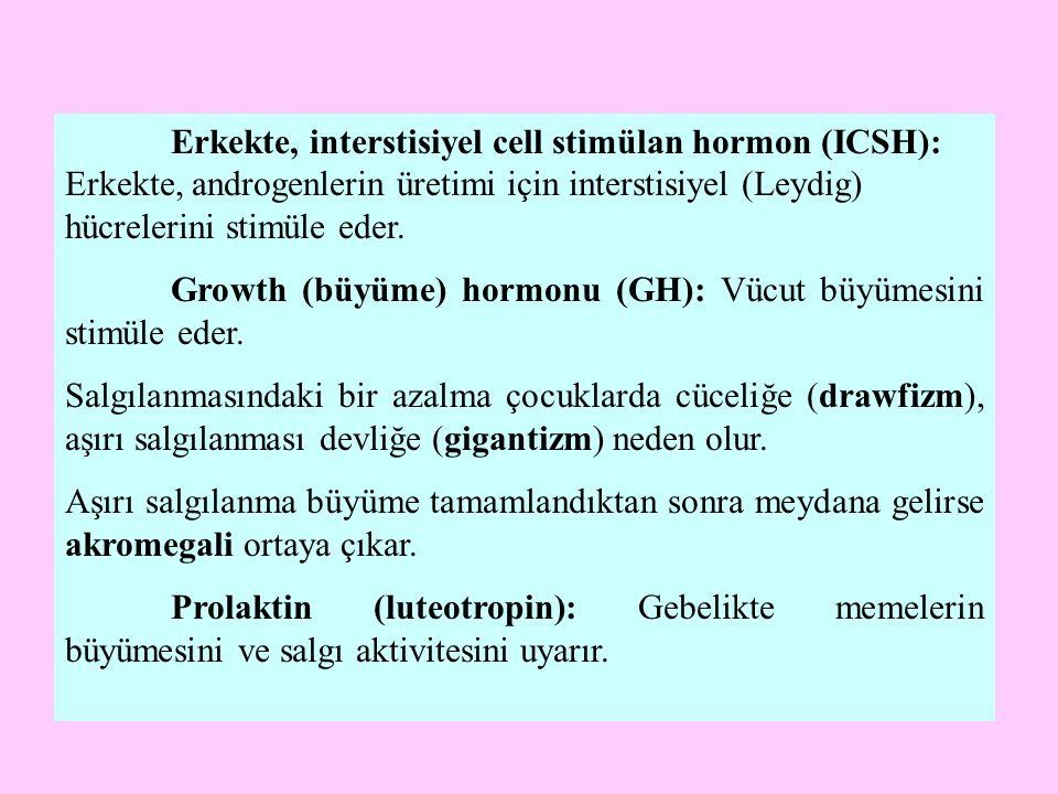 Growth (büyüme) hormonu (GH): Vücut büyümesini stimüle eder.