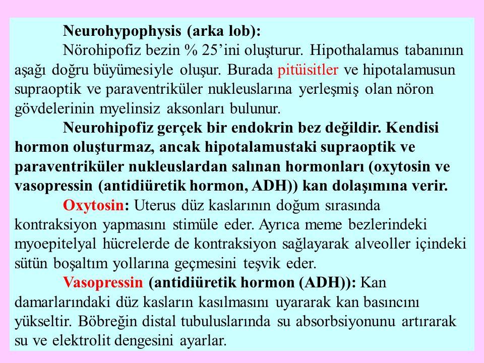 Neurohypophysis (arka lob):