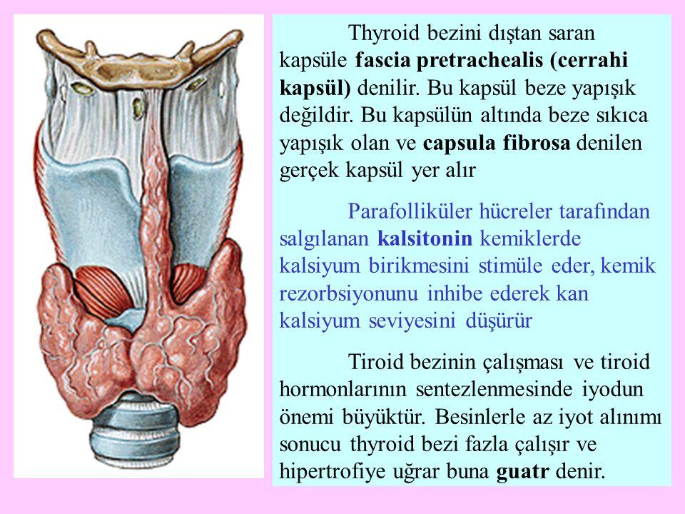Thyroid bezini dıştan saran kapsüle fascia pretrachealis (cerrahi kapsül) denilir. Bu kapsül beze yapışık değildir. Bu kapsülün altında beze sıkıca yapışık olan ve capsula fibrosa denilen gerçek kapsül yer alır