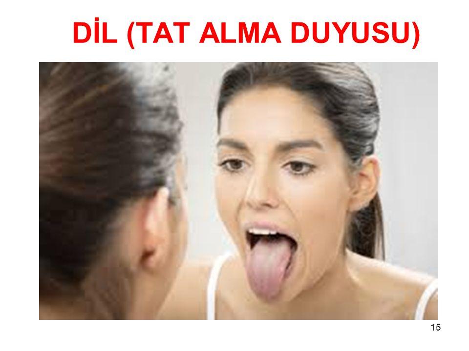 DİL (TAT ALMA DUYUSU)