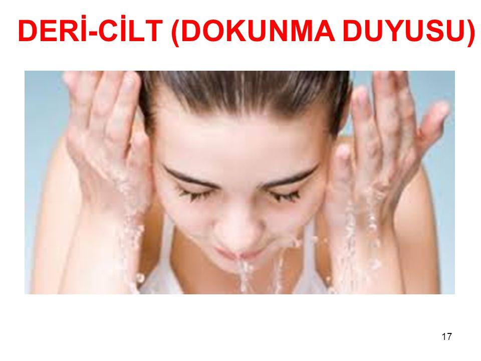 DERİ-CİLT (DOKUNMA DUYUSU)