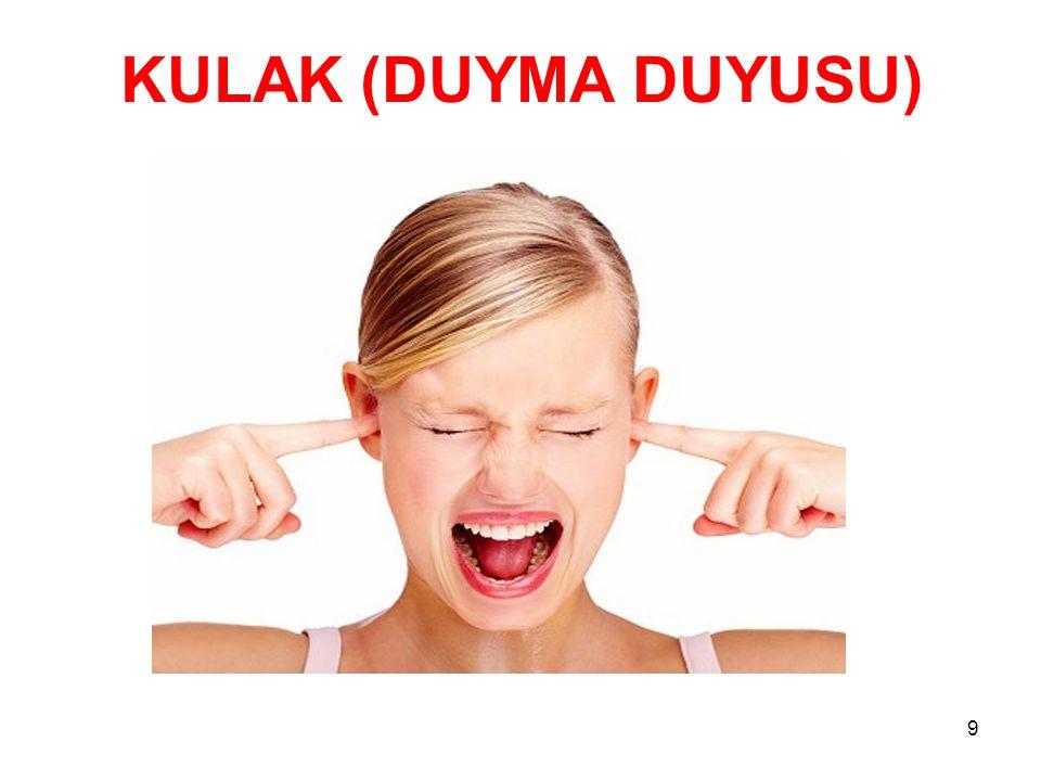 KULAK (DUYMA DUYUSU)
