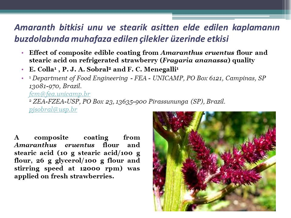 Amaranth bitkisi unu ve stearik asitten elde edilen kaplamanın buzdolabında muhafaza edilen çilekler üzerinde etkisi