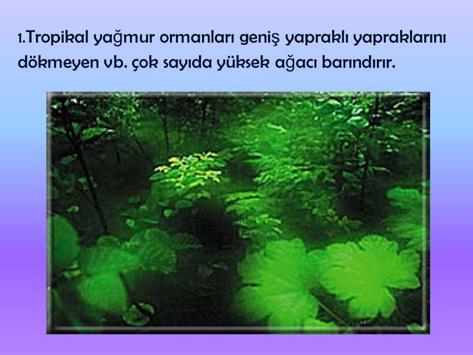 1. Tropikal yağmur ormanları geniş yapraklı yapraklarını dökmeyen vb