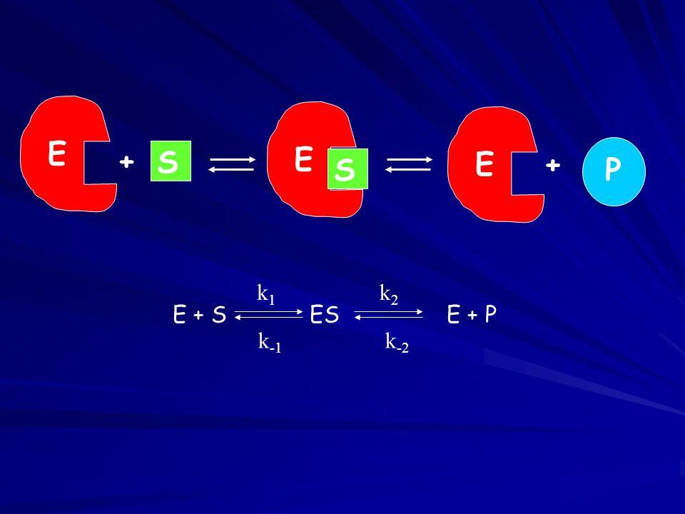 E S E + S E + P E + S ES E + P k1 k-1 k2 k-2