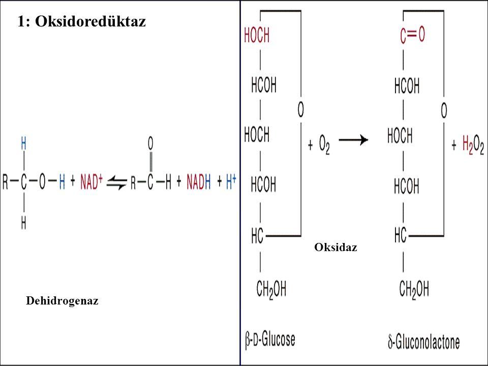 1: Oksidoredüktaz Oksidaz - Dehidrogenaz -