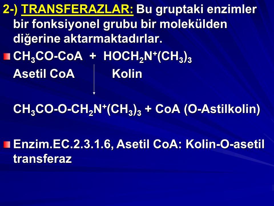 2-) TRANSFERAZLAR: Bu gruptaki enzimler bir fonksiyonel grubu bir molekülden diğerine aktarmaktadırlar.