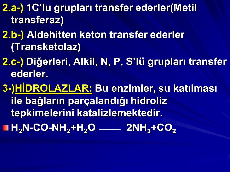 2.a-) 1C'lu grupları transfer ederler(Metil transferaz)