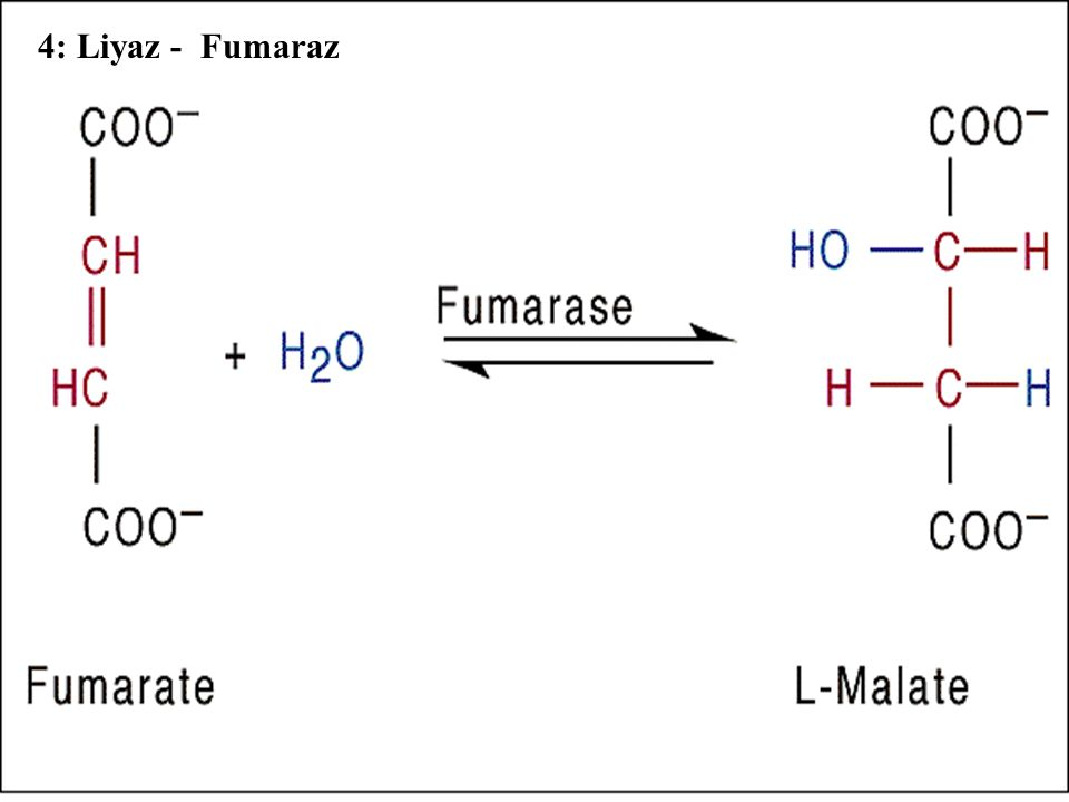 4: Liyaz - Fumaraz