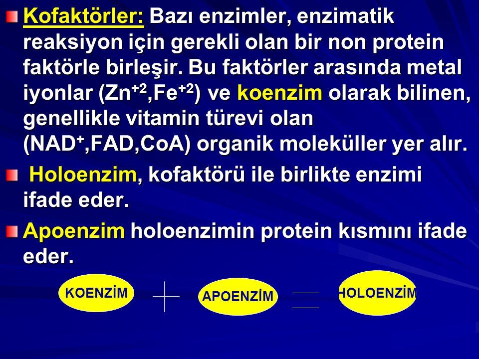 Holoenzim, kofaktörü ile birlikte enzimi ifade eder.