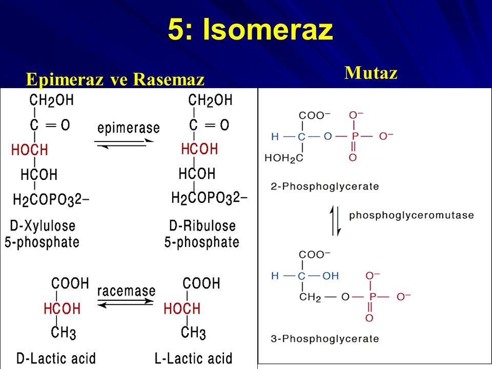 5: Isomeraz Mutaz Epimeraz ve Rasemaz