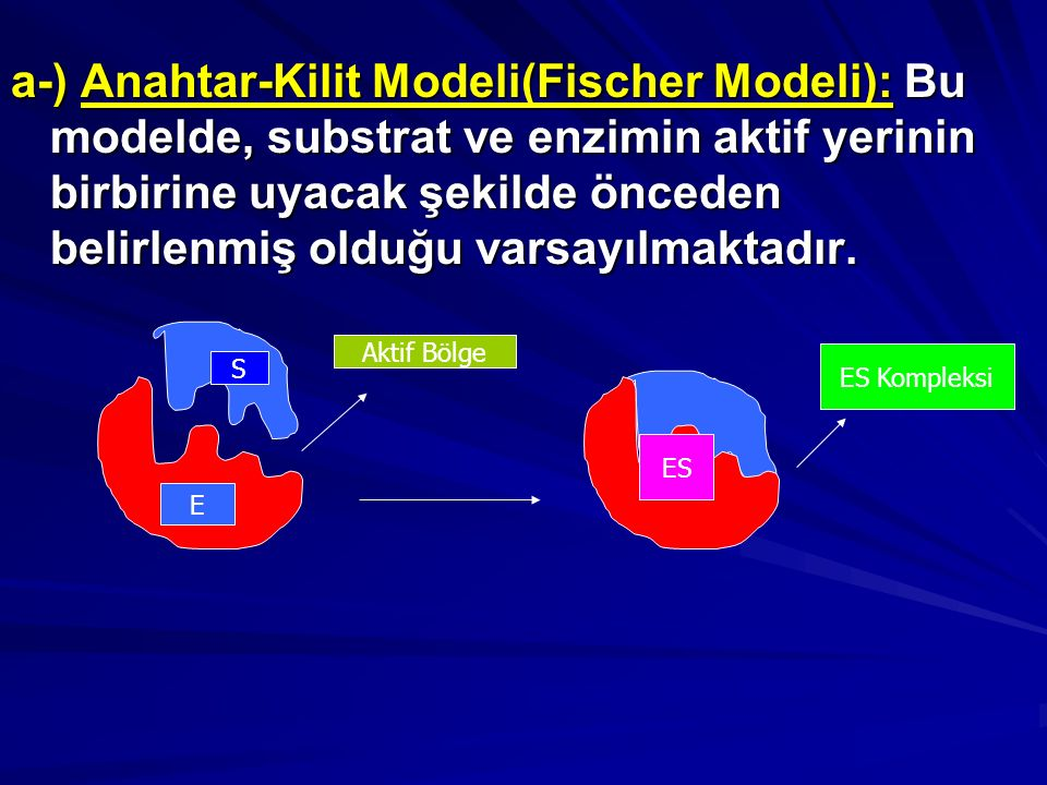a-) Anahtar-Kilit Modeli(Fischer Modeli): Bu modelde, substrat ve enzimin aktif yerinin birbirine uyacak şekilde önceden belirlenmiş olduğu varsayılmaktadır.