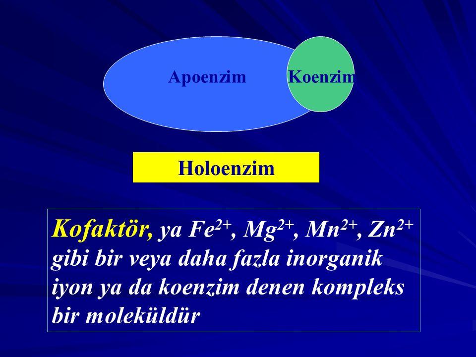 Apoenzim Koenzim. Holoenzim.