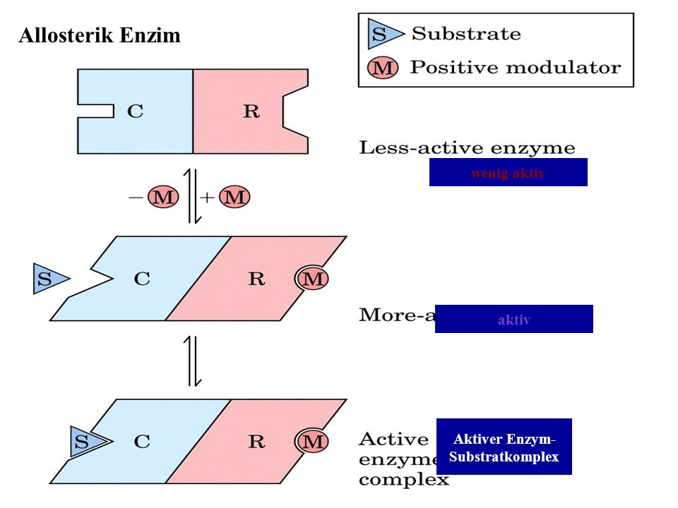 Allosterik Enzim wenig aktiv aktiv Aktiver Enzym- Substratkomplex