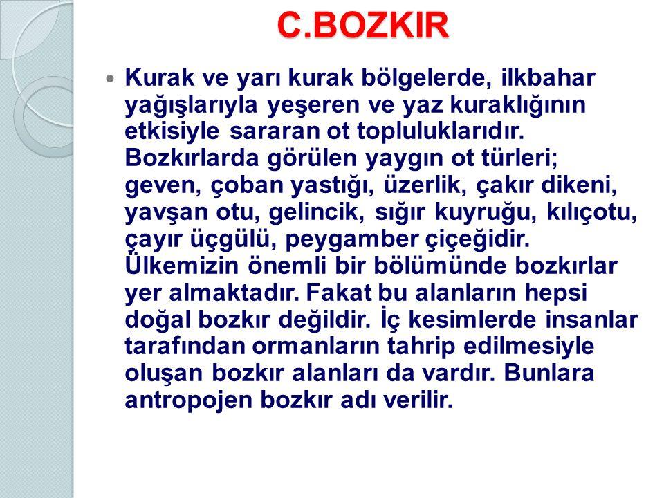 C.BOZKIR