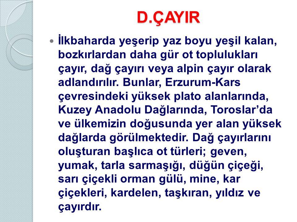 D.ÇAYIR