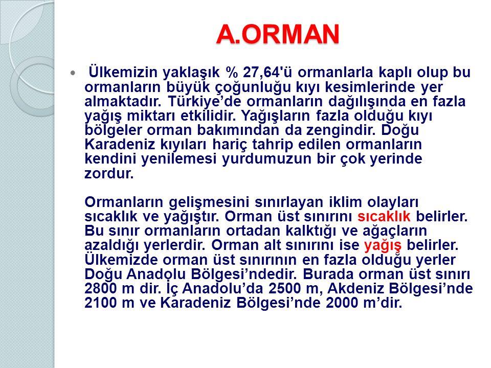 A.ORMAN
