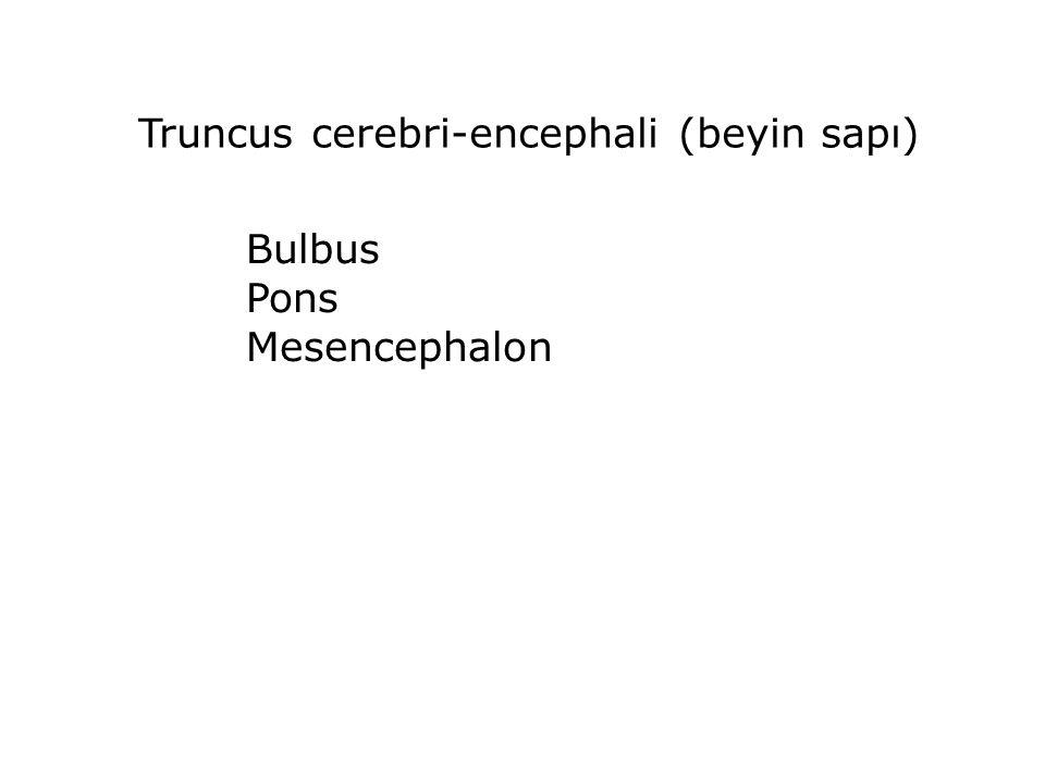 Truncus cerebri-encephali (beyin sapı)