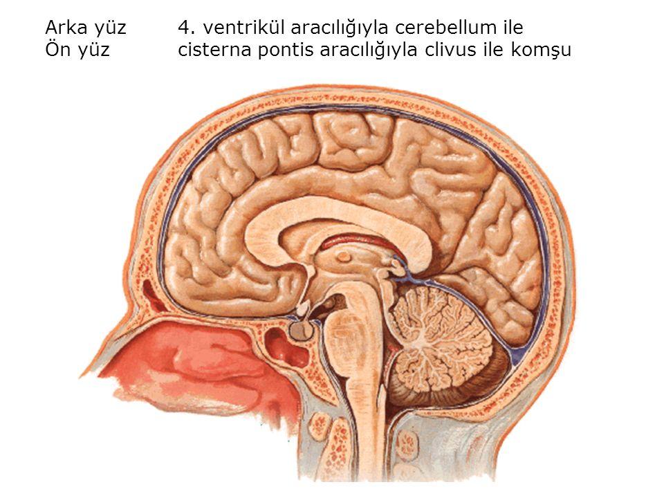 Arka yüz 4. ventrikül aracılığıyla cerebellum ile