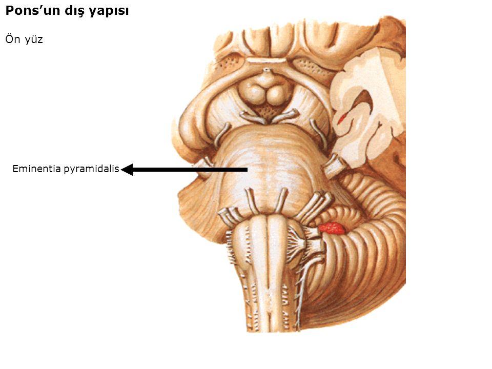 Pons'un dış yapısı Ön yüz Eminentia pyramidalis