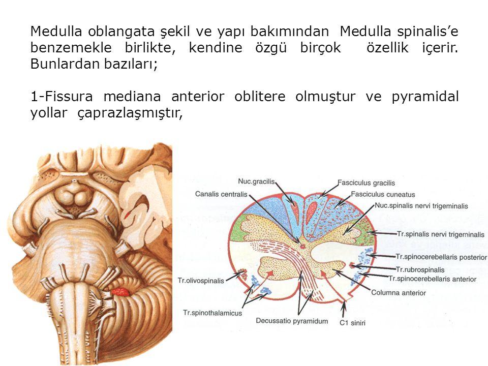 Medulla oblangata şekil ve yapı bakımından Medulla spinalis'e benzemekle birlikte, kendine özgü birçok özellik içerir. Bunlardan bazıları;