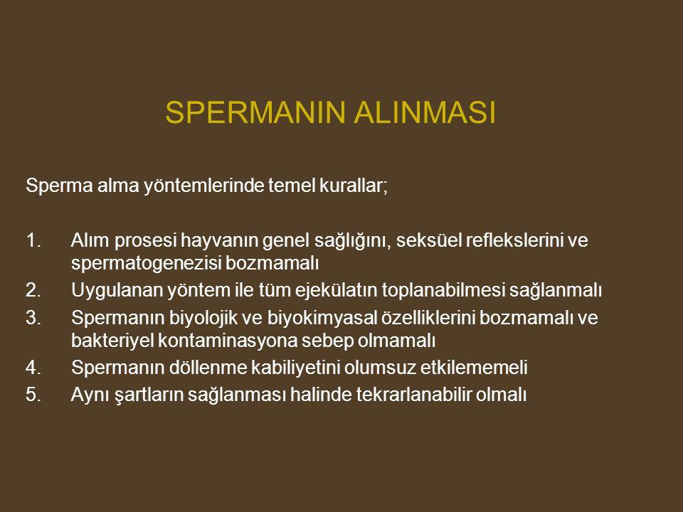 SPERMANIN ALINMASI Sperma alma yöntemlerinde temel kurallar;