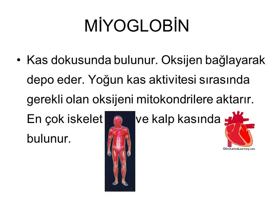 MİYOGLOBİN