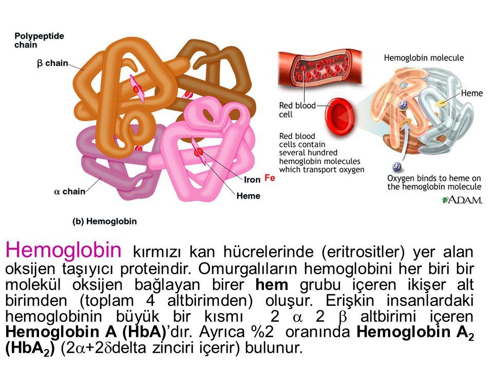 Hemoglobin kırmızı kan hücrelerinde (eritrositler) yer alan oksijen taşıyıcı proteindir.