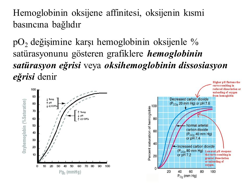 Hemoglobinin oksijene affinitesi, oksijenin kısmi basıncına bağlıdır