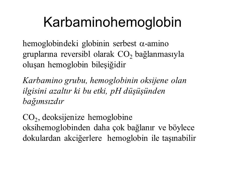 Karbaminohemoglobin hemoglobindeki globinin serbest -amino gruplarına reversibl olarak CO2 bağlanmasıyla oluşan hemoglobin bileşiğidir.