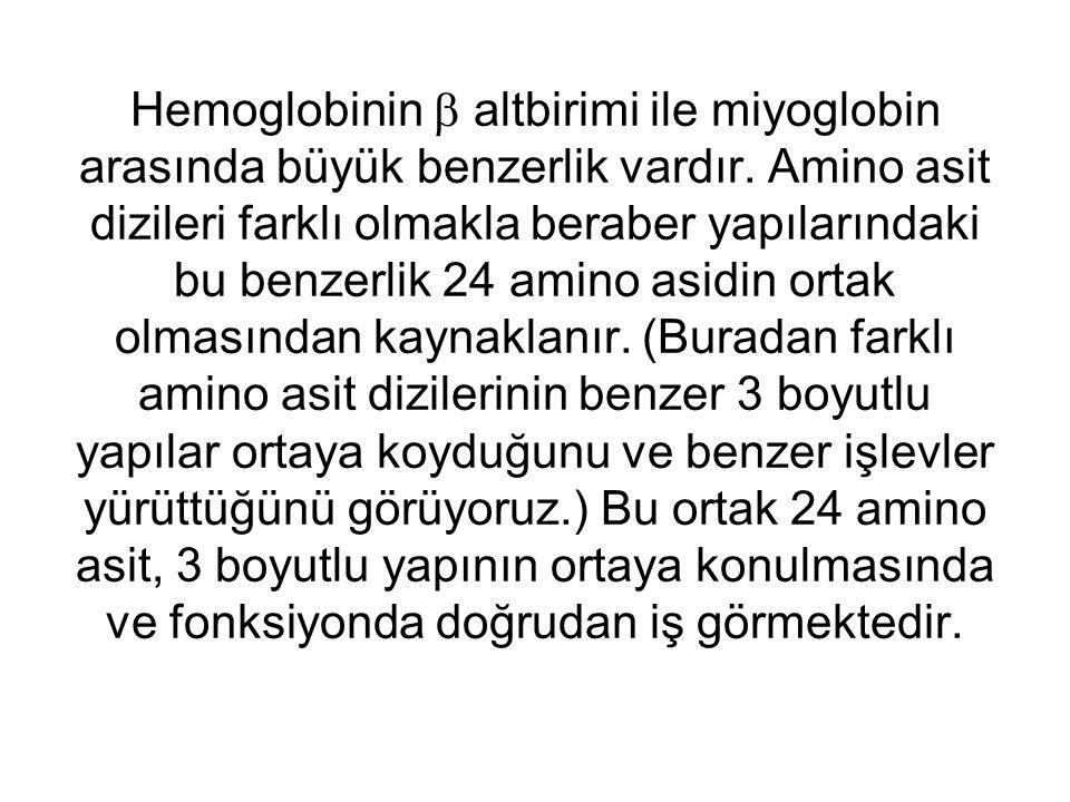 Hemoglobinin  altbirimi ile miyoglobin arasında büyük benzerlik vardır.