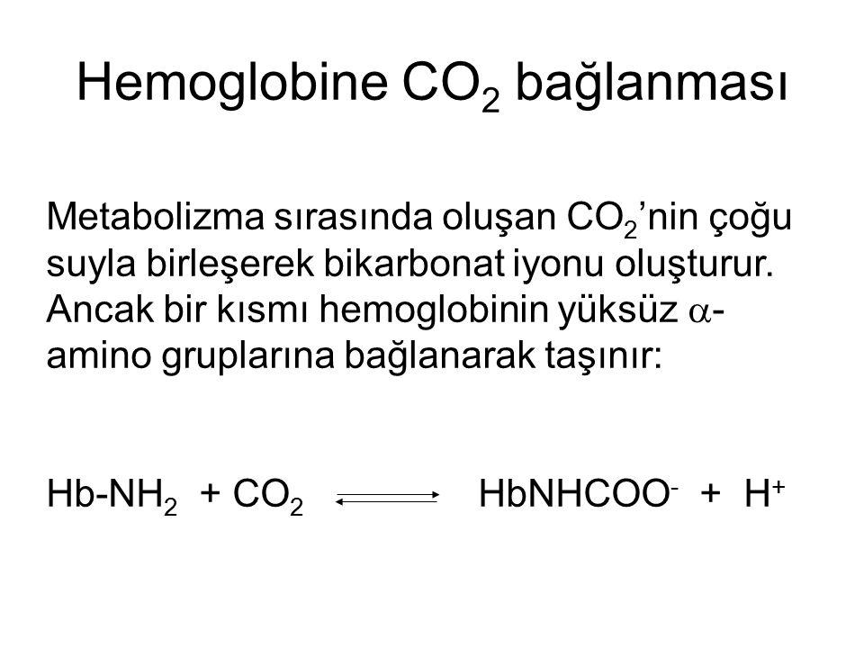 Hemoglobine CO2 bağlanması