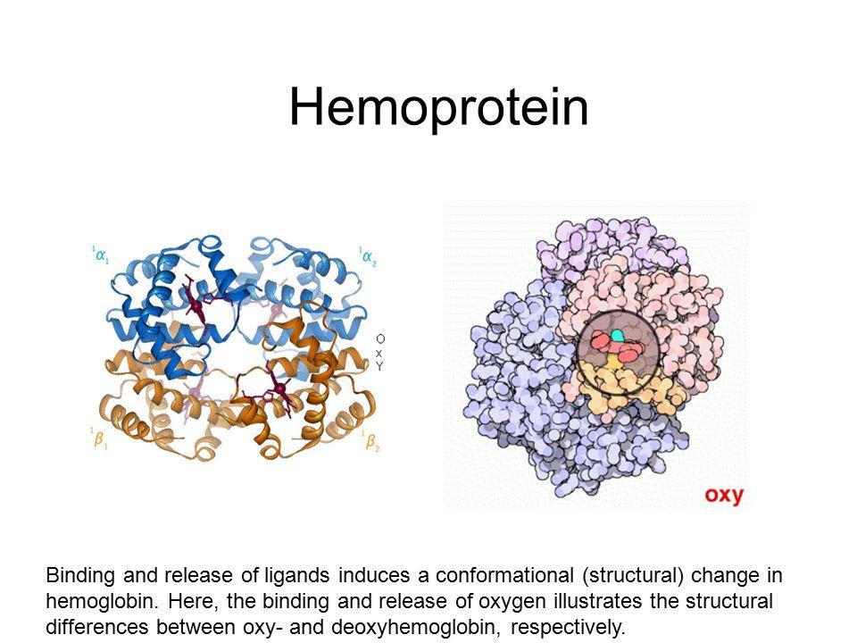 Hemoprotein
