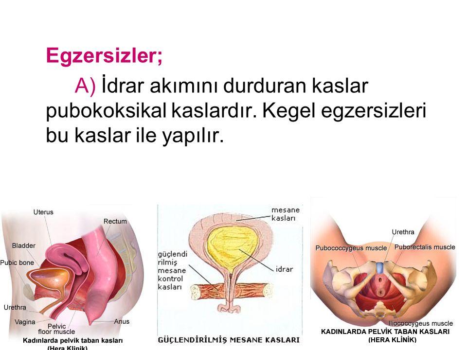 Egzersizler; A) İdrar akımını durduran kaslar pubokoksikal kaslardır