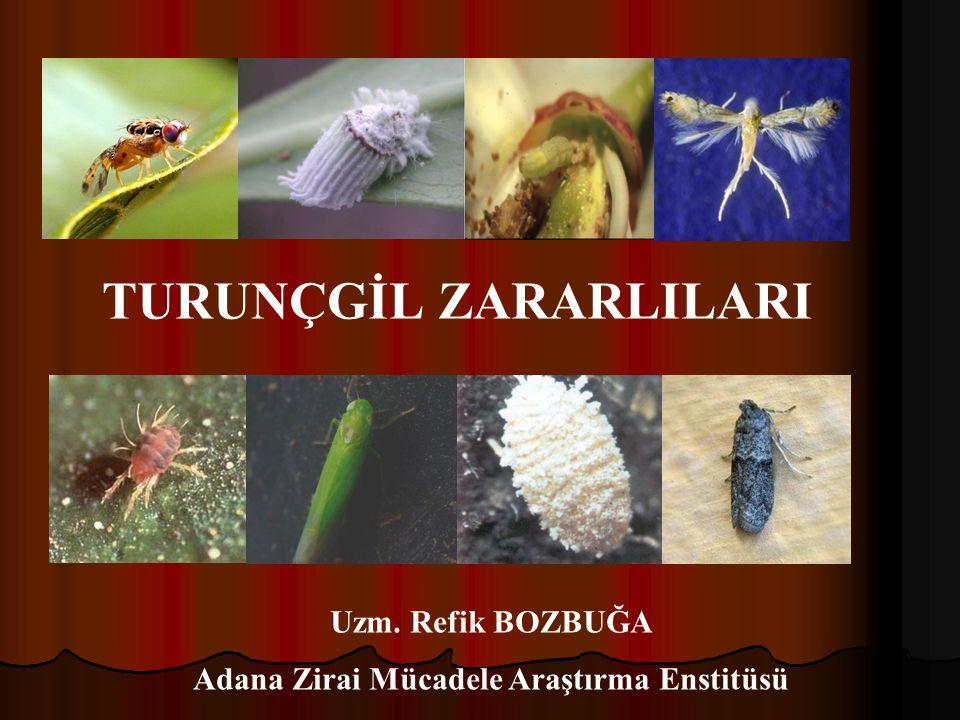 Adana Zirai Mücadele Araştırma Enstitüsü TURUNÇGİL ZARARLILARI