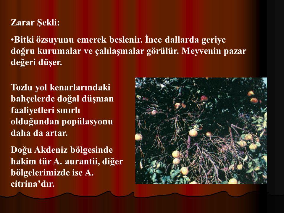Zarar Şekli: Bitki özsuyunu emerek beslenir. İnce dallarda geriye doğru kurumalar ve çalılaşmalar görülür. Meyvenin pazar değeri düşer.