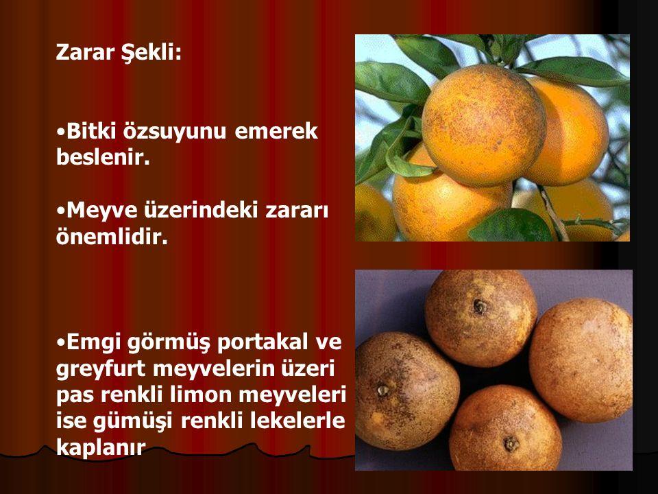 Zarar Şekli: Bitki özsuyunu emerek beslenir. Meyve üzerindeki zararı önemlidir.