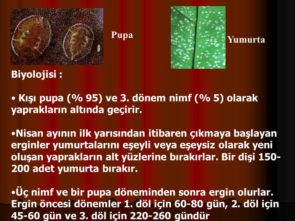 Pupa Yumurta. Biyolojisi : Kışı pupa (% 95) ve 3. dönem nimf (% 5) olarak yaprakların altında geçirir.