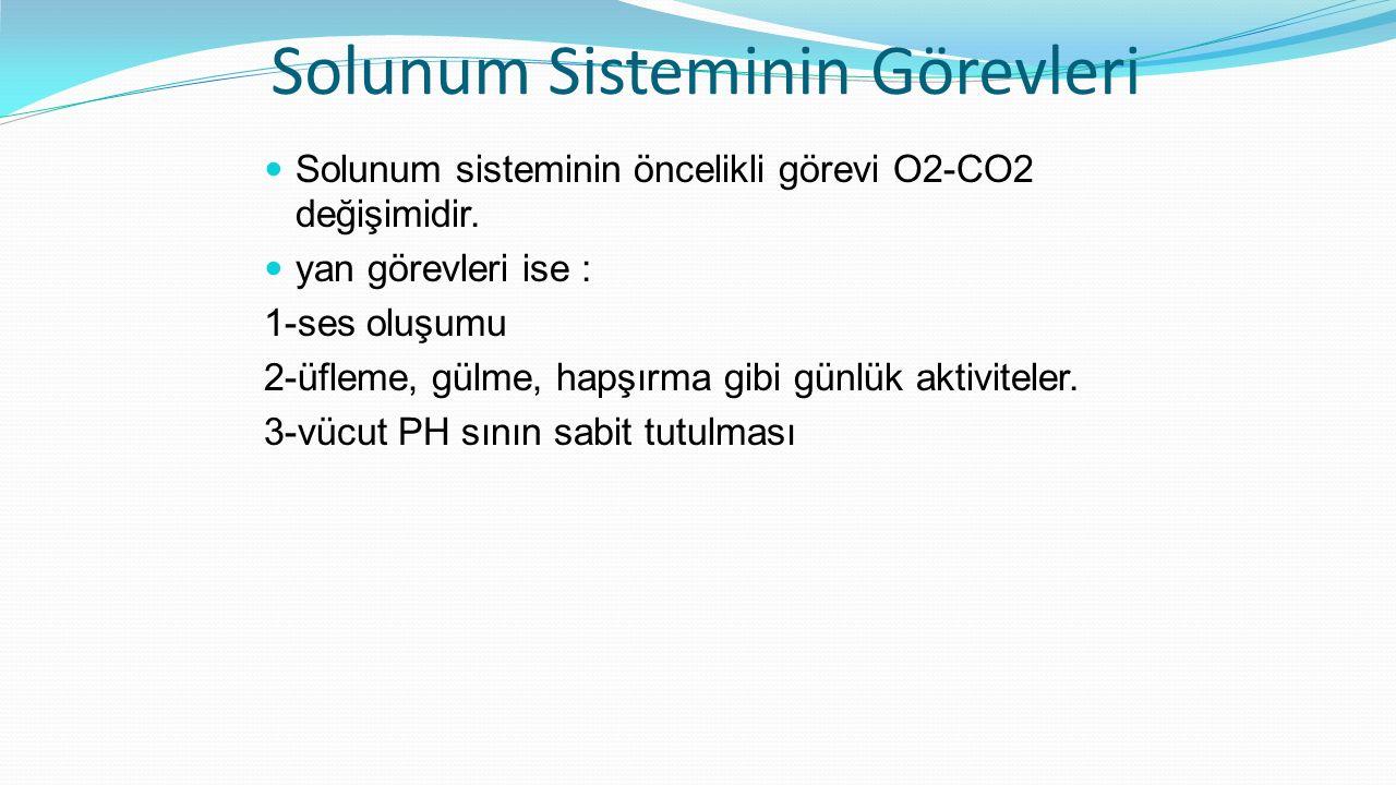 Solunum Sisteminin Görevleri