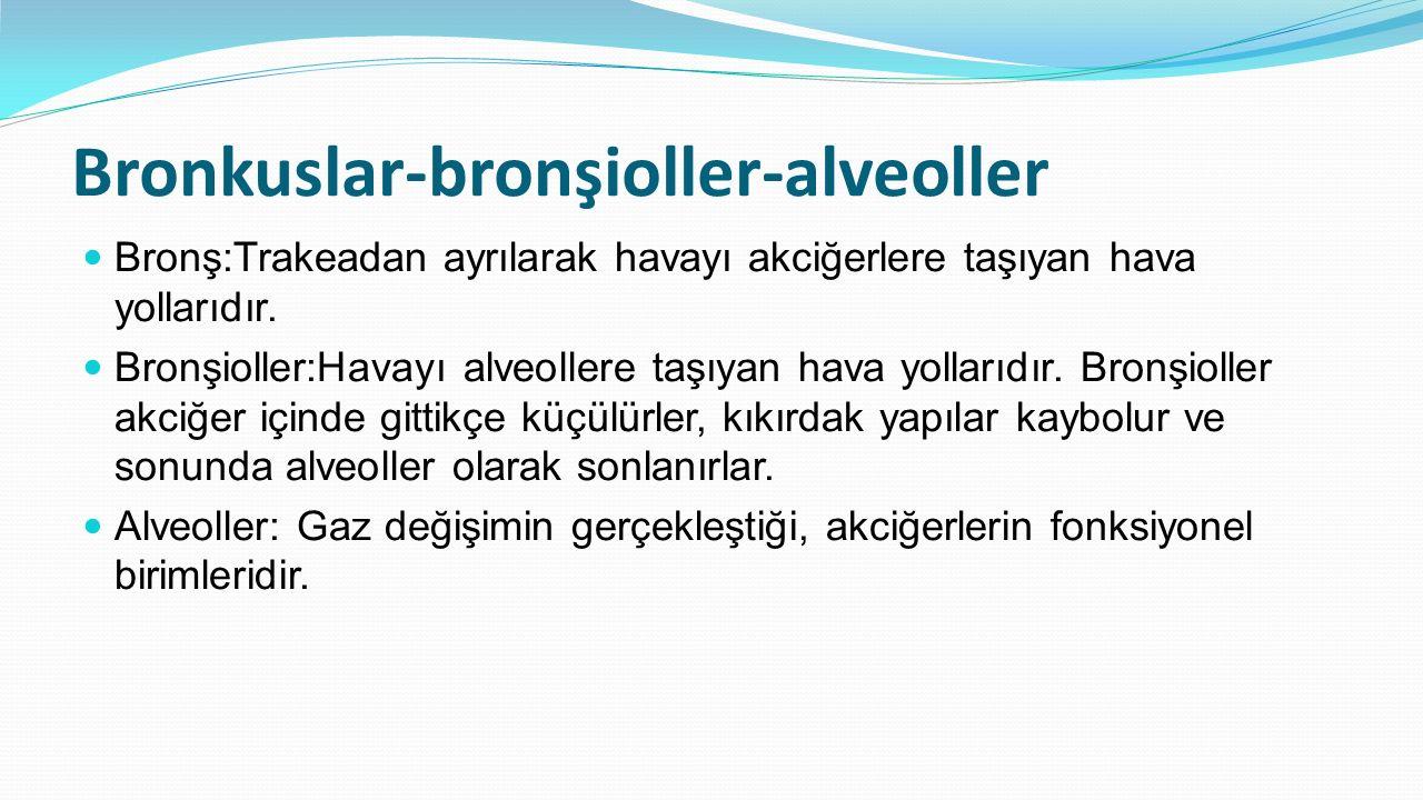 Bronkuslar-bronşioller-alveoller