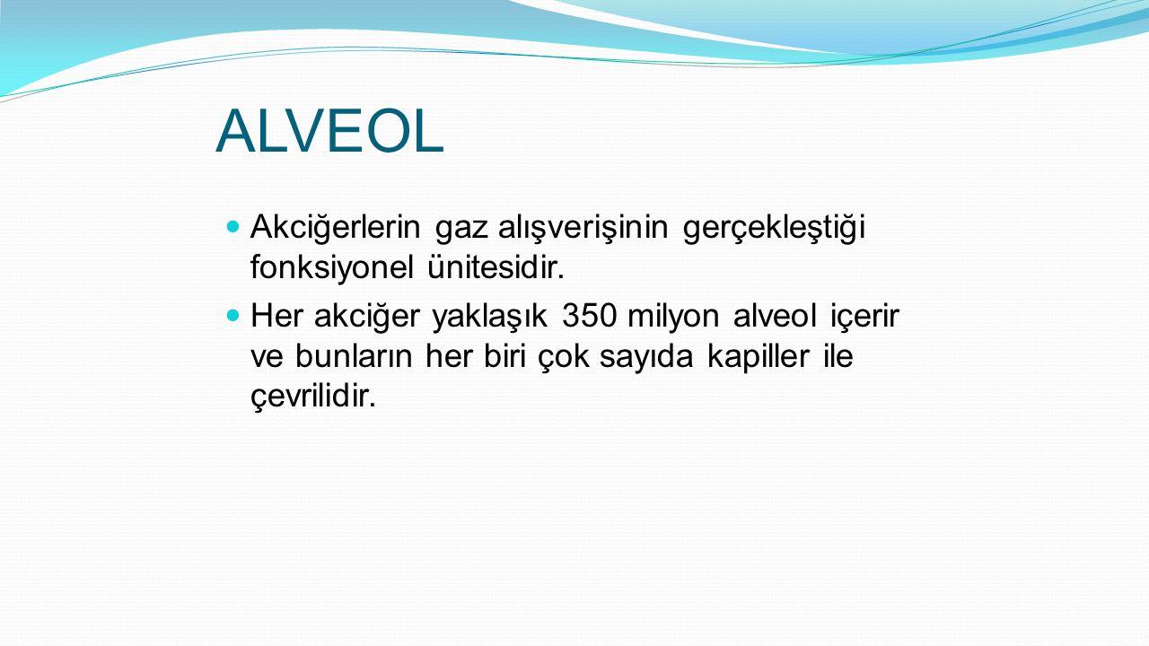 ALVEOL Akciğerlerin gaz alışverişinin gerçekleştiği fonksiyonel ünitesidir.