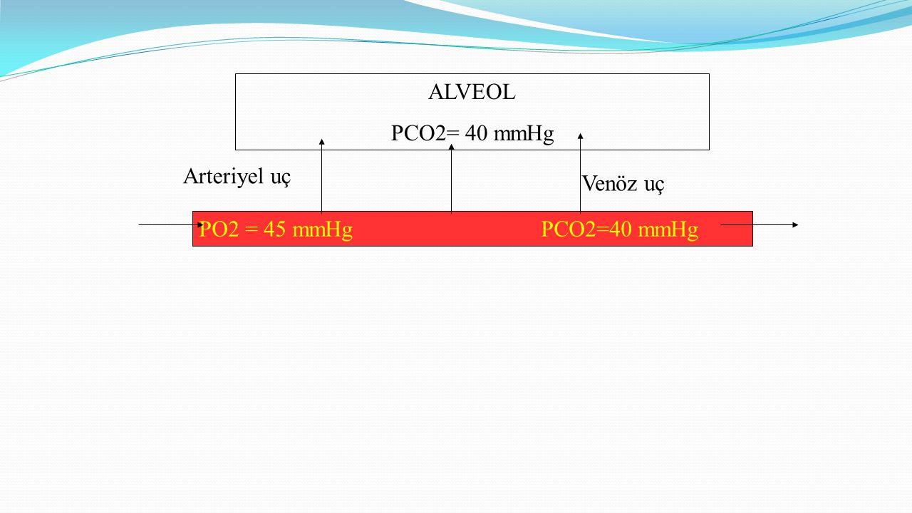 ALVEOL PCO2= 40 mmHg Arteriyel uç Venöz uç PO2 = 45 mmHg PCO2=40 mmHg