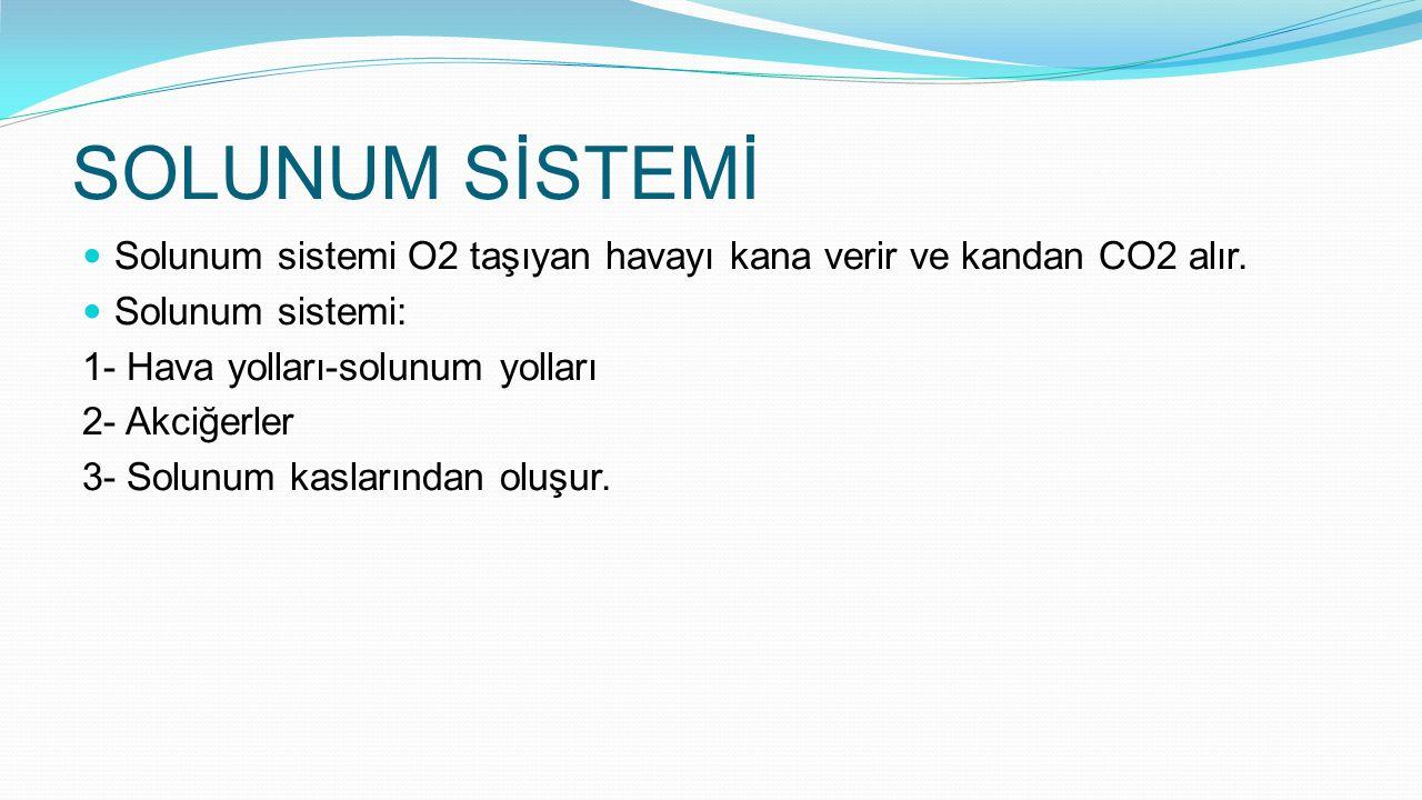 SOLUNUM SİSTEMİ Solunum sistemi O2 taşıyan havayı kana verir ve kandan CO2 alır. Solunum sistemi: 1- Hava yolları-solunum yolları.