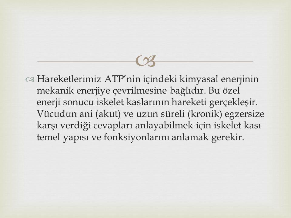 Hareketlerimiz ATP'nin içindeki kimyasal enerjinin mekanik enerjiye çevrilmesine bağlıdır.