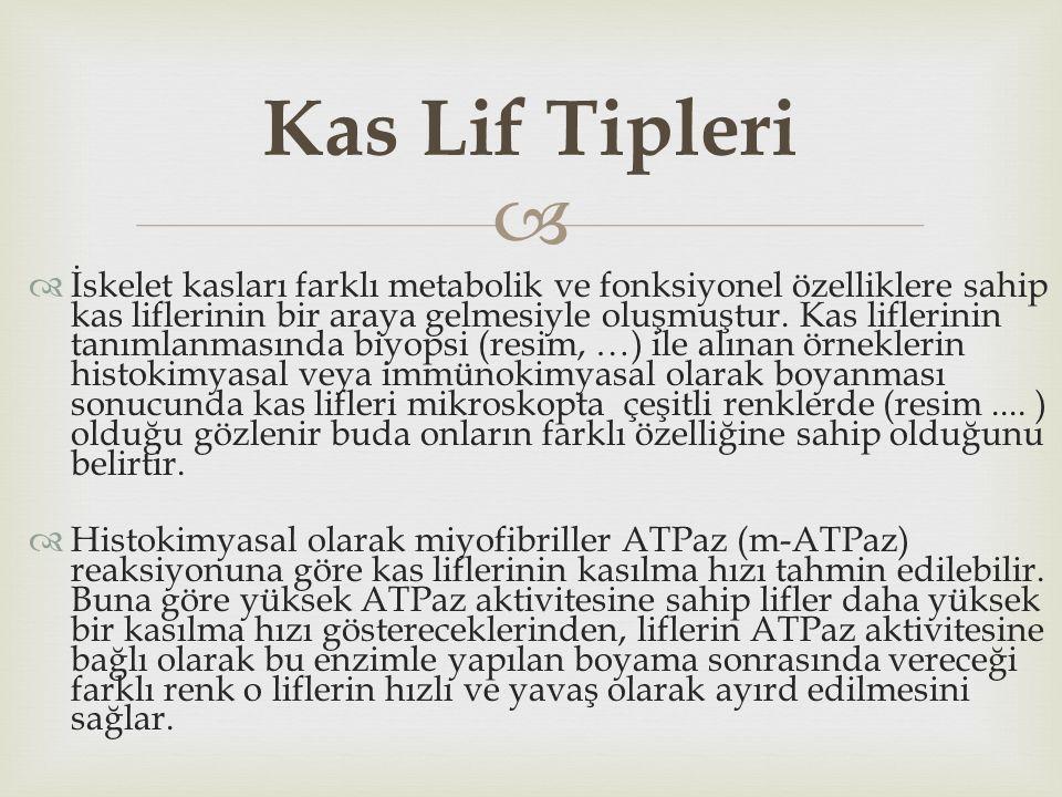 Kas Lif Tipleri