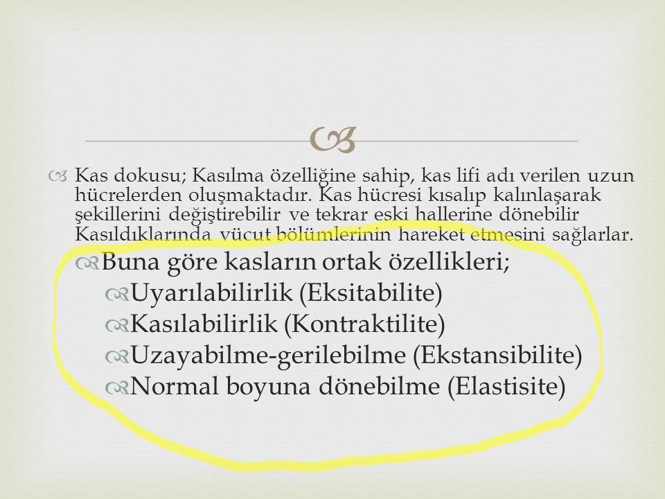 Buna göre kasların ortak özellikleri; Uyarılabilirlik (Eksitabilite)