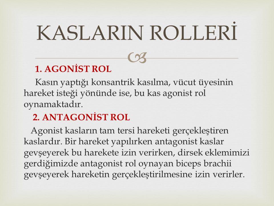 KASLARIN ROLLERİ 1. AGONİST ROL