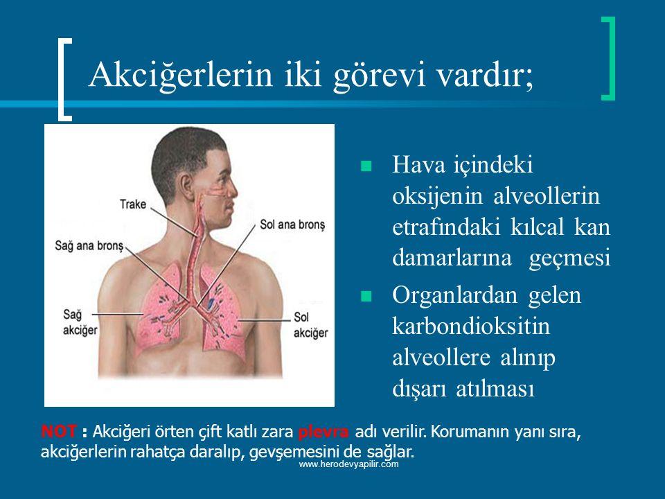 Akciğerlerin iki görevi vardır;