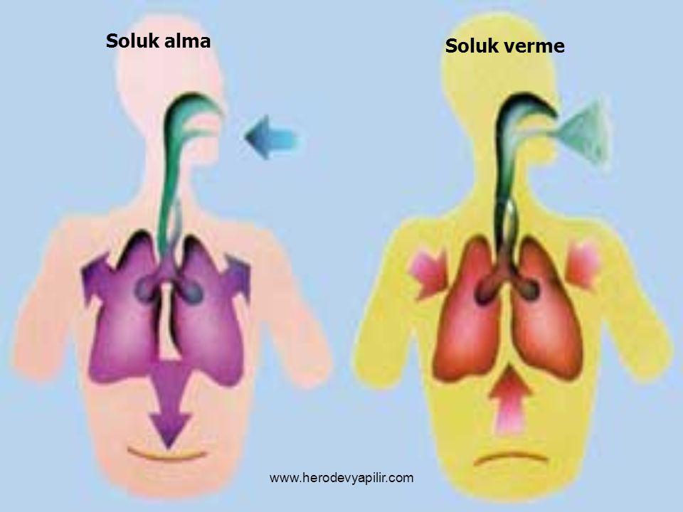 Soluk alma Soluk verme www.herodevyapilir.com