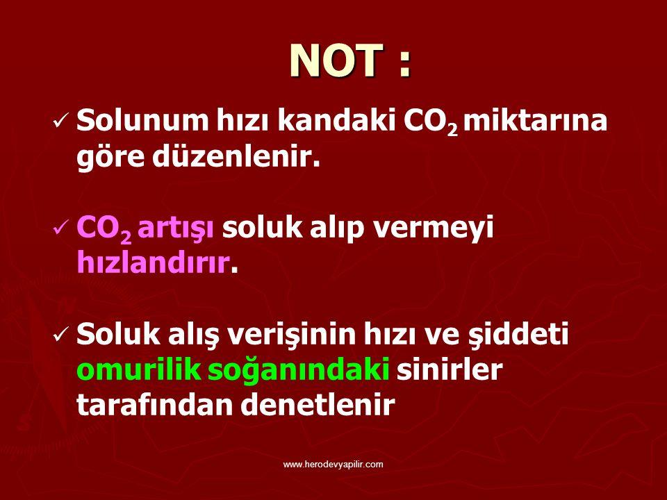 NOT : Solunum hızı kandaki CO2 miktarına göre düzenlenir.
